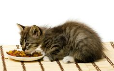 Nonetheless, is oatmeal good for pet cats as well? Can cats also eat oatmeal?  tag: can cats eat instant oatmeal, can cats eat oatmeal, can cats eat oatmeal cookies, can cats eat oatmeal cream pies, can cats eat oatmeal raisin cookies, can cats eat quaker oats, can cats eat rolled oats