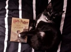 Harry Potter book and cat.