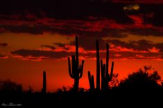 Sunset in Sonoran Desert - Arizona Beautiful Sunset, Beautiful World, Beautiful Places, Amazing Sunsets, Flora Und Fauna, Le Far West, Belle Photo, Wonders Of The World, Cool Pictures