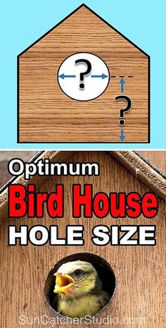 Plans of Woodworking Diy Projects - Birdhouse hole size. Best dimensions for the entrance hole size for a bird house or nestbox. Get A Lifetime Of Project Ideas & Inspiration! Bird Feeder Plans, Bird House Feeder, Squirrel Feeder Diy, Woodworking Projects Diy, Woodworking Plans, Wood Projects, Woodworking Logo, Woodworking Quotes, Woodworking Techniques