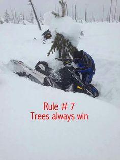 Rule  #7  Trees always win