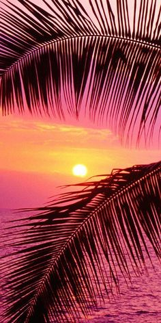 """🌟Tante S!fr@ loves this📌🌟passionplenty: """" Palm trees and ocean at sunset, Hawaii by John Warden on Getty Images """" Beautiful Sunset, Beautiful World, Beautiful Places, Beautiful Images Of Nature, Simply Beautiful, Amazing Sunsets, Amazing Nature, Art Sur Toile, Pink Sunset"""