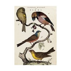 natural history of birds