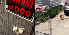 Beware Of These 19 Dogs: We Warned You