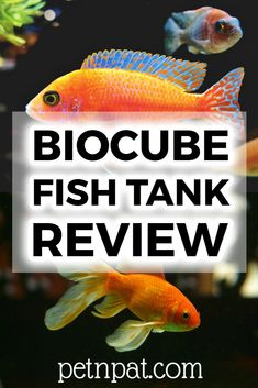 The Biocube fish tank is an awesome starter fish tank - especially as a saltwater aquarium! Aquarium Ideas, Aquarium Design, Aquarium Fish Tank, Aquarium Stand, Animals For Kids, Animals And Pets, Baby Animals, Funny Animals, Animal Quotes