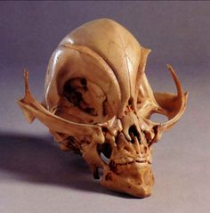 Here's a strange skull in a museum in Brazil. It was mummified when it was presumably brought from Egypt.