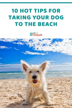10 Hot Tips For Taking Your Dog to the Beach. A day on the beach is an amazing way to spend time. You can add to the experience by bringing your dog with you. There are 10 essential dog beach tips for safety, security and also various other factors to consider when you bring your pooch to the beach with you. #dog #beach #tips #dogbeach #dogtips #beachtips #huntingtonbeach #california #pet #pets #pettravel #travelideas #traveltips Beach Tips, Beach Hacks, Places In California, California Travel, Beach Photography, Travel Photography, Travel Essentials, Travel Tips, Pet Travel Carrier