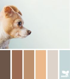 Puppy Tones - http://design-seeds.com/index.php/home/entry/puppy-tones5