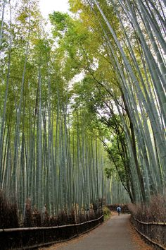 Arashiyama Bamboo Groves: Strolling through another World in Kyoto, Japan | Sushi Bytes – Photo essays inspired by food and travel, by Websu...