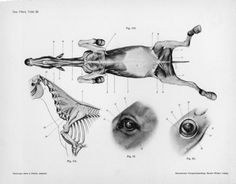 horse anatomy part X
