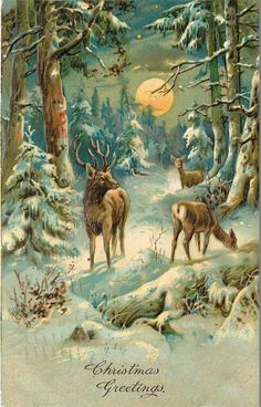 Christmas Big Buck Deer in Snowy Forest Full Moon Germany 1909