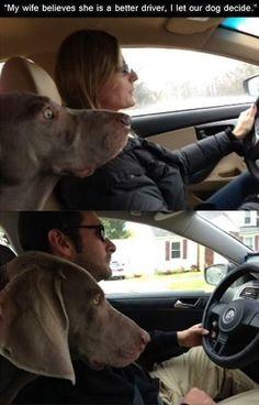 insolite chien femme homme voiture