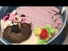 Kitty and her kittens - YouTube