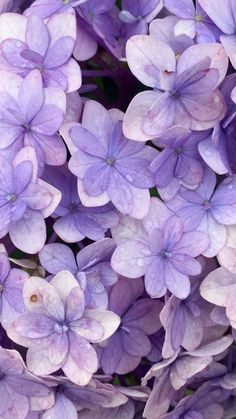 Flower Phone Wallpaper, Free Iphone Wallpaper, Purple Wallpaper, Butterfly Wallpaper, Aesthetic Iphone Wallpaper, Aesthetic Wallpapers, Violet Aesthetic, Lavender Aesthetic, Aesthetic Colors