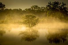 Fotograf Tree von Liang Li auf 500px