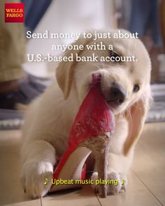 Need to settle up? Send money with Zelle - right from the Wells Fargo app! Yorkie Puppy, Chihuahua, Funny Animals, Cute Animals, Funny Dogs, Baby Animals, Puppy Care, Dog Photos, Dog Owners