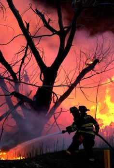 News Photo: Firefighters battle a brush fire in the Meadowlands…