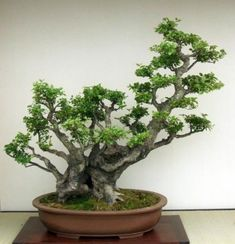 N - Bonsai by My pages