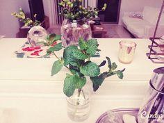 susaayuさんが投稿した画像です。他のsusaayuさんの画像も見てませんか?|おすすめの観葉植物や花の名前、ガーデニング雑貨が見つかる!GreenSnap(グリーンスナップ)