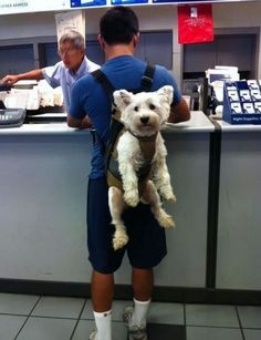 Sorry just had to post this, funniest thing :P too cute!