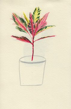 Pink Plant - Lizzy Stewart I like the contrast of colored leaves to the undone, sketched flower pot. Art And Illustration, Botanical Illustration, Illustrations Posters, Collages, Pink Plant, Morris, Botanical Drawings, Lizzy Stewart, Painting & Drawing