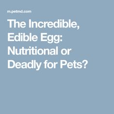 The Incredible, Edible Egg: Nutritional or Deadly for Pets?
