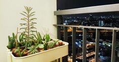 Cactus in nightlife.