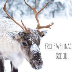 Ein zauberhaftes weihnachtsfest wünsche ich Euch 💫