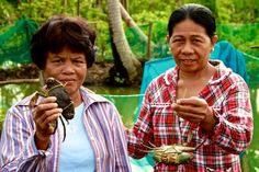 Restoring Livelihoods: Mud Crab Production. These woman know that by working to restore their source of livelihood, they are also making their family food secure. #WorldFoodProgramme