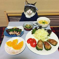 - December 26 2018 at - Foods and Inspiration - Yummy Sweet Meals - Comfort Foods Recipe Ideas - And Kitchen Motivation - Delicious Cakes - Food Addiction Pictures - Decadent Lifestyle Choices Cute Cats And Kittens, Cool Cats, I Love Cats, Cute Baby Animals, Animals And Pets, Cat Cosplay, Cat Dresses, All About Cats, Funny Animal Pictures