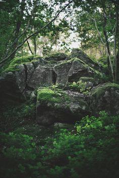 Moss by A / C N, via 500px