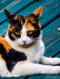 Beautiful calico... looks so much like my first cat, Daisy.