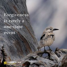 How Often Should You Forgive?