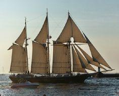 Tall Ships in Muskegon Michigan 2003 Muskegon Michigan, Old Sailing Ships, Bay Lights, Sail Away, Lake Erie, Tall Ships, Nautical, Essex County, Sail Boats