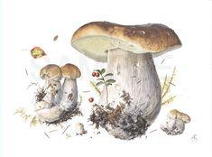 Как известно, ботаническая иллюстрация - моя великая страсть и слабость. И печаль моя, ибо в наших краях штука диковинная, невиданная. В отличие от скандинавских…
