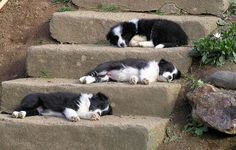 Lindos Border collies | Yvone Pereira | Flickr