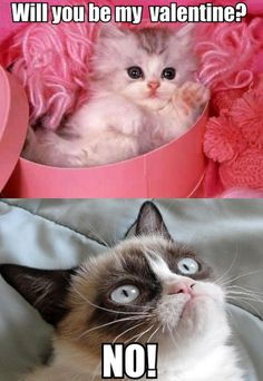 Cute Kitten to Grumpy Cat Will You Be My Valentine?: This cute little kitten wants Grumpy Cat to be her valentine! Grumpy Cat's reply: NO! Grumpy Cat Valentines, Funny Valentine Memes, Hate Valentines Day, Funny Grumpy Cat Memes, Grumpy Kitty, Funny Cats, Valentine Stuff, Funny Memes, Funny Shit