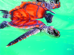 10 Resorts Where You Can Snorkel with Sea Turtles: If you enjoy snorkeling, you absolutely have to graduate from fish to sea turtles. Observing sea turtles in their natural habitat is a magical experience. From the South Pacific to Nicaragua, these 10 destinations offer a unique change to dive in and swim with these rare endangered animals.