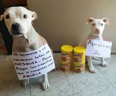 Funny Dogs, Cute Dogs, Funny Animals, Cute Animals, Funny Quotes, Funny Memes, Spanish Memes, Mundo Animal, Best Memes