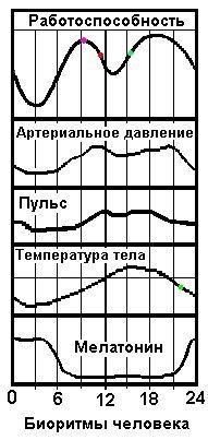 Циркадианные биоритмы человека - графики периодов работоспособности, пульса (ЧСС), температуры тела, арт.давления, по часам, их время в течение суток