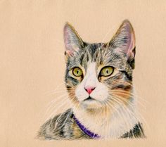 Kitteh - coloured pencil