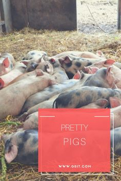 Pigs are pretty cool. Learn how to keep them on your homestead.