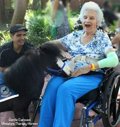 Magic up to his tricks /Gentle Carousel Miniature Therapy Horses.