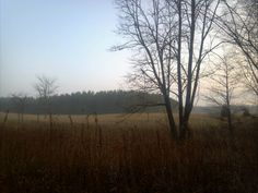 Perfect morning in the woods