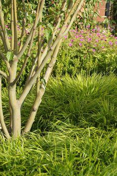 Parrotia plantation www.vereal.lu Jardin et forêt Luxembourg