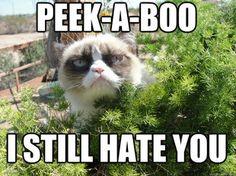 ahahaha grumpy cat :P
