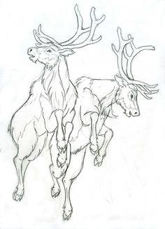 reindeer anatomy - Google Search