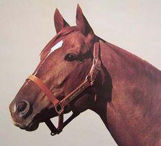 SECRETARIAT - BEAUTIFUL 1974 20X24 INCH HORSE RACING LITHOGRAPH BY TONY LEONARD! in Sports Mem, Cards & Fan Shop, Fan Apparel & Souvenirs, Horse Racing | eBay