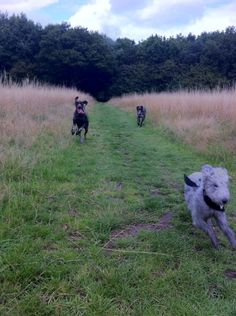 Out for a run..... Meena, Willow & storm..... Beddy & GSP.....❤️