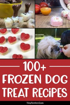 Is your dog feeling the heat this summer If so cool them down with some homemade frozen dog treats Find over 100 frozen dog treat recipes here with a HUGE range of ingredients dogtreats Pumpkin Dog Treats, Homemade Dog Treats, Healthy Dog Treats, Best Dog Food, Dry Dog Food, Pet Food, Dog Treat Recipes, Dog Food Recipes, Free Recipes